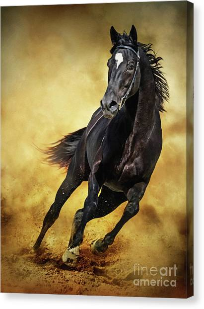 Canvas Print featuring the photograph Black Horse Running Wild by Dimitar Hristov