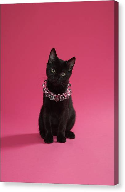 Black Kitten Wearing Jewelled Necklace Canvas Print
