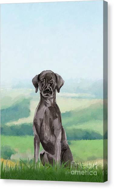 Purebred Canvas Print - Black Labrador by John Edwards