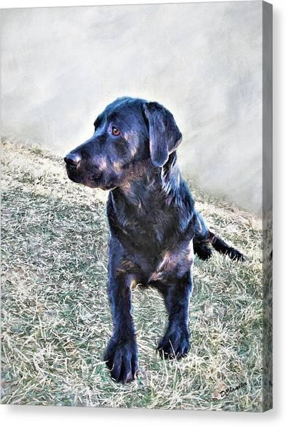 Black Labrador Retriever - Daisy Canvas Print