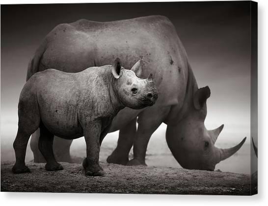 Sandy Canvas Print - Black Rhinoceros Baby And Cow by Johan Swanepoel