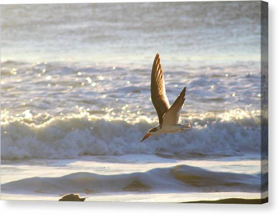 Canvas Print featuring the photograph Black Skimmer In Flight by Robert Banach