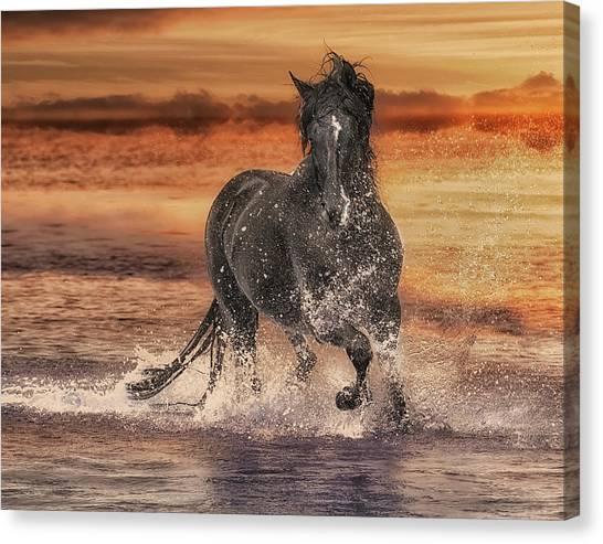 Black Stallion Canvas Print - Black Stallion At Play by Wade Aiken