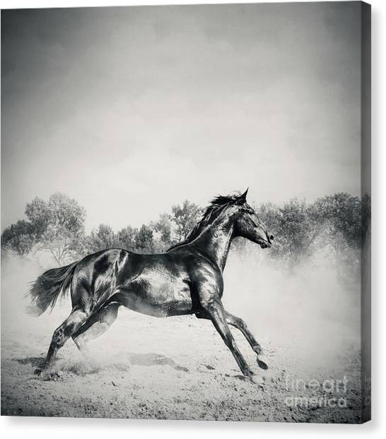 Canvas Print featuring the photograph Black Stallion Horse by Dimitar Hristov