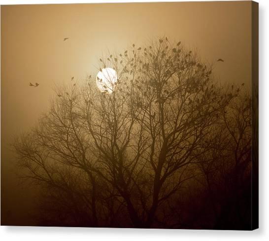 Blackbird Sunrise Canvas Print