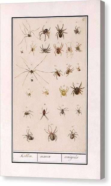 Blad Met Spinnen Canvas Print