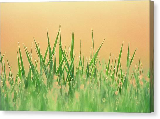 Blade Of Grass Canvas Print - Blade Of Grass by Martin Ruegner