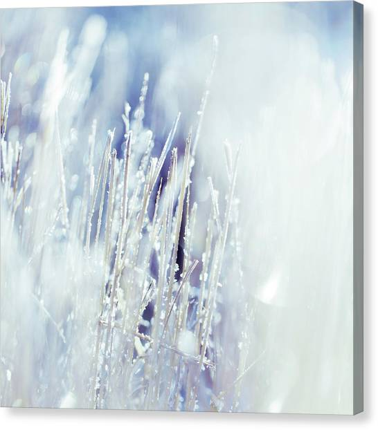 Blade Of Grass Canvas Print - Blade Of Grass With White Frost On Them by Mmeemil