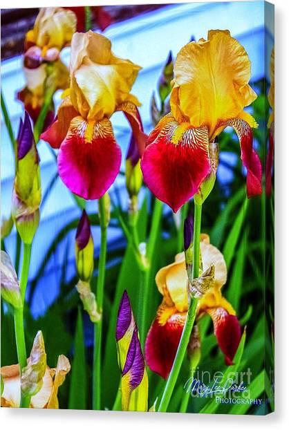 Blatant Iris Canvas Print