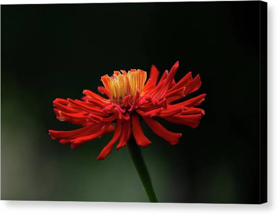 Canvas Print featuring the photograph Blazing Red by Dale Kincaid