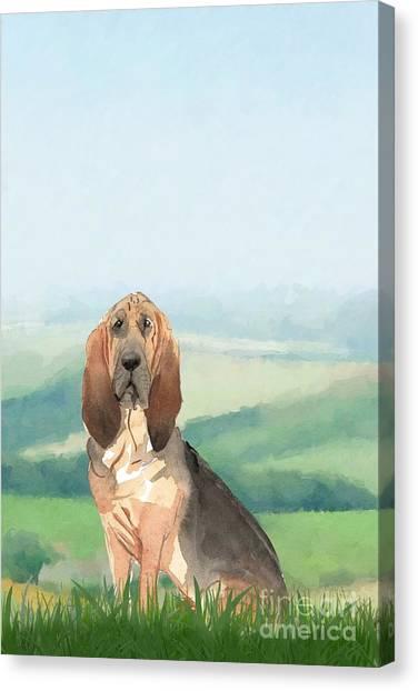 Purebred Canvas Print - Bloodhound by John Edwards