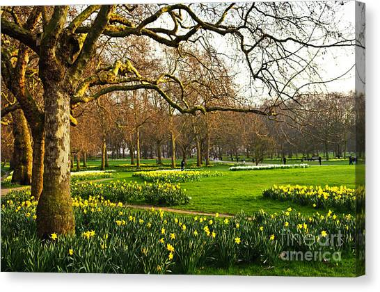 British Canvas Print - Blooming Daffodils In St Jamess Park In by Elena Elisseeva