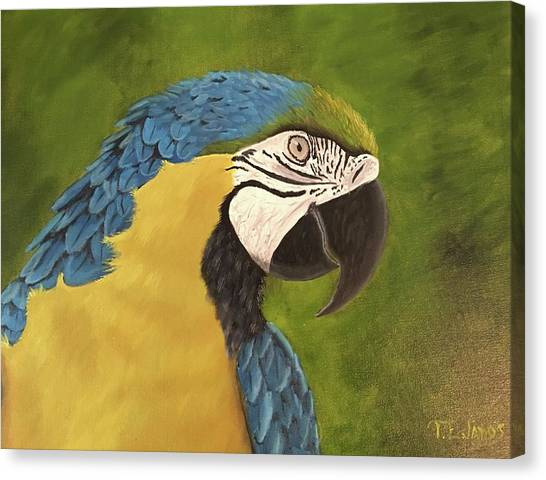 Blue And Gold Mccaw Canvas Print