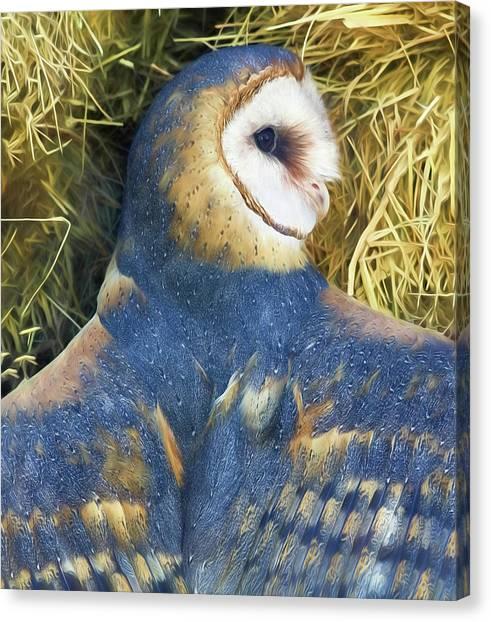 Blue Barn Owl Canvas Print