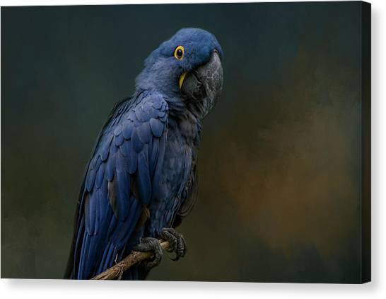 Blue Beauty Canvas Print