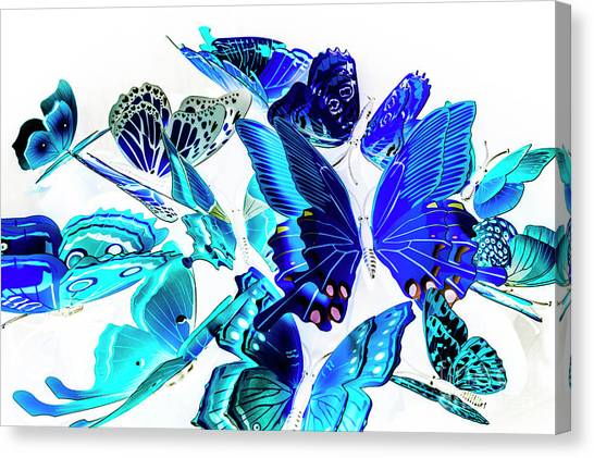 Moth Canvas Print - Blue Buggery  by Jorgo Photography - Wall Art Gallery