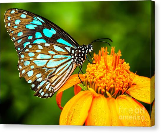 Yellow Butterfly Canvas Print - Blue Butterfly Fly In Morning Nature by Anek.soowannaphoom