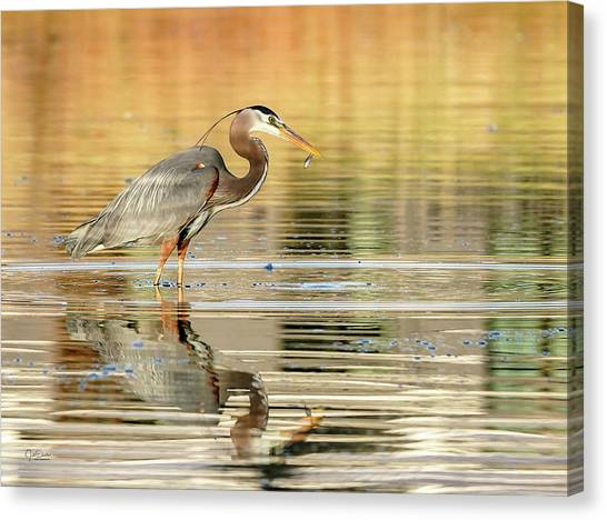 Blue Heron Fishing Canvas Print