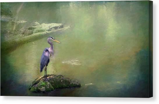 Blue Heron Isolated Canvas Print