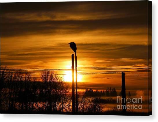 Canvas Print - Blue Heron Sunrise by Nick Gustafson
