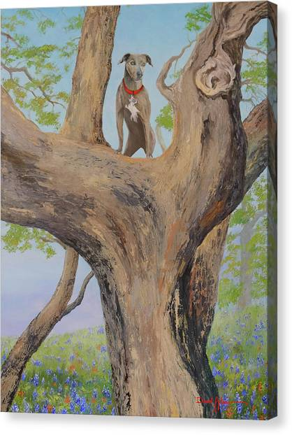 Blue Lacey In A Tree Canvas Print