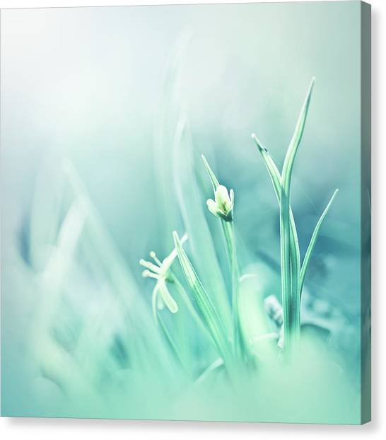 Blade Of Grass Canvas Print - Blue World by Jeja