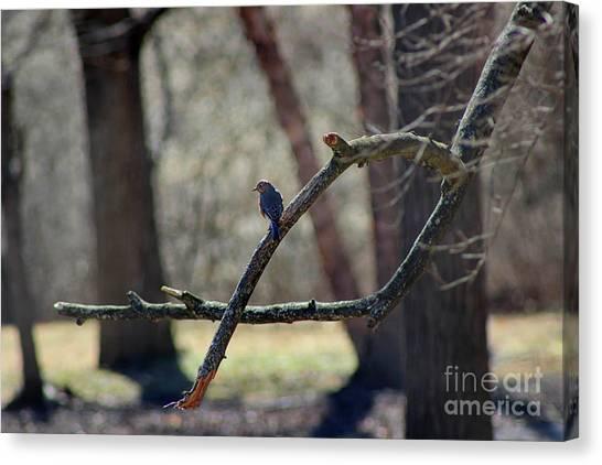 Bluebird, Bluebird, Sing To Me Canvas Print