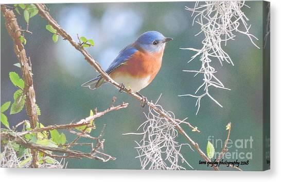 Bluebird In Dixie  Canvas Print