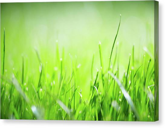 Blade Of Grass Canvas Print - Blurred Nature by Delihayat