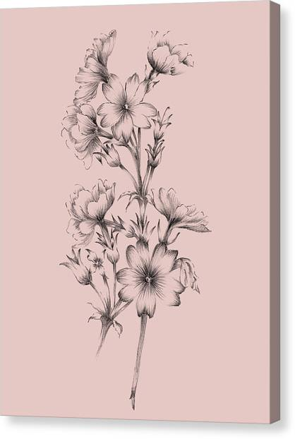 Dahlias Canvas Print - Blush Pink Flower Drawing II by Naxart Studio