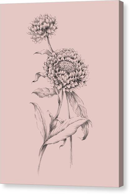 Dahlias Canvas Print - Blush Pink Flower Drawing IIi by Naxart Studio