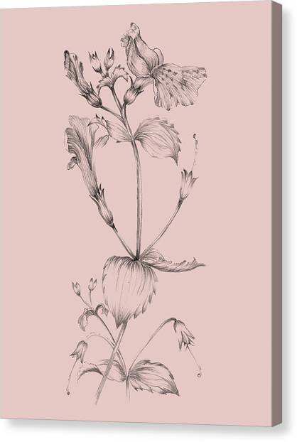 Dahlias Canvas Print - Blush Pink Flower I by Naxart Studio