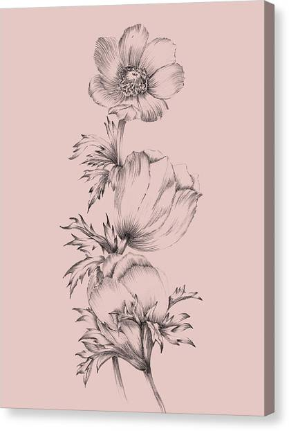 Dahlias Canvas Print - Blush Pink Flower II by Naxart Studio