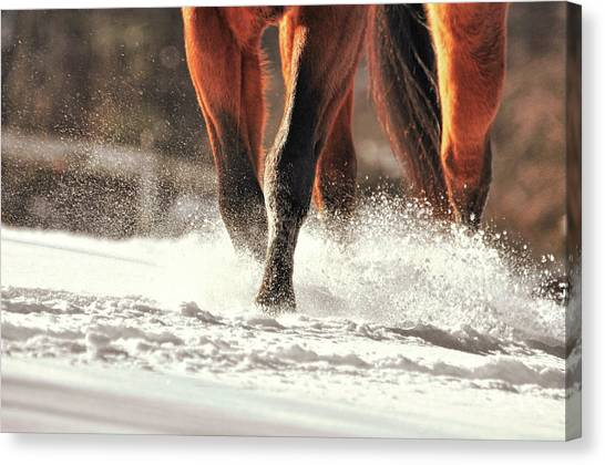 Blustery Trot Canvas Print by JAMART Photography