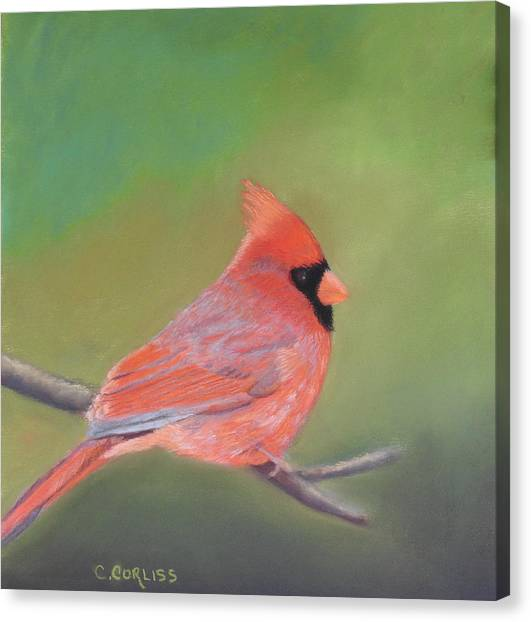 Bonded Pair - Male Cardinal Canvas Print