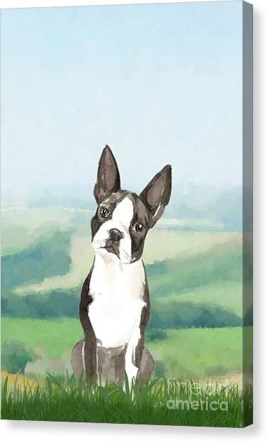 Purebred Canvas Print - Boston Terrier by John Edwards