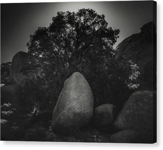 Boulder With Tree Canvas Print by Joseph Smith