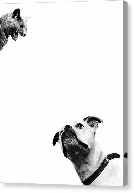 Boxer Dog Looking At Cat Above Head Canvas Print