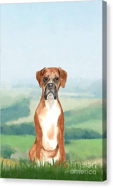 Purebred Canvas Print - Boxer by John Edwards