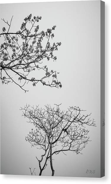 Canvas Print featuring the photograph Branching Out II Bw by David Gordon