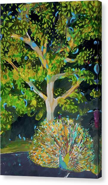 Branching Out Peacock Canvas Print
