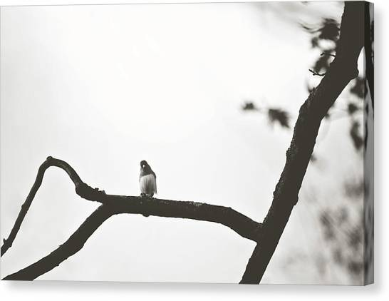 Canvas Print featuring the photograph Branching Out by Sue Collura