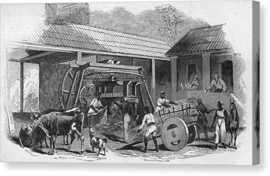 Brazilian Sugar Mill Canvas Print by Hulton Archive