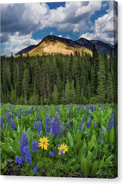 Bridger Teton National Forest Canvas Print by Leland D Howard