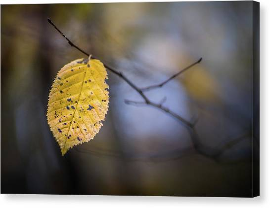 Canvas Print featuring the photograph Bright Fall Leaf 1 by Michael Arend