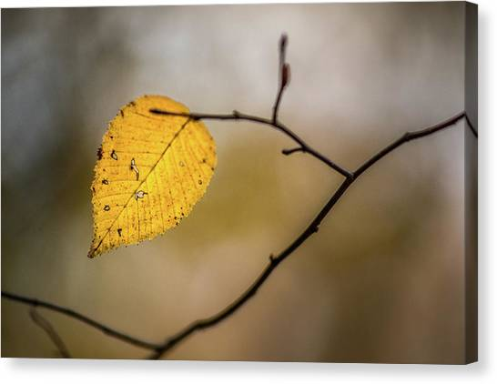 Canvas Print featuring the photograph Bright Fall Leaf 10 by Michael Arend