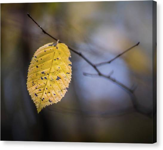 Canvas Print featuring the photograph Bright Fall Leaf 3 by Michael Arend