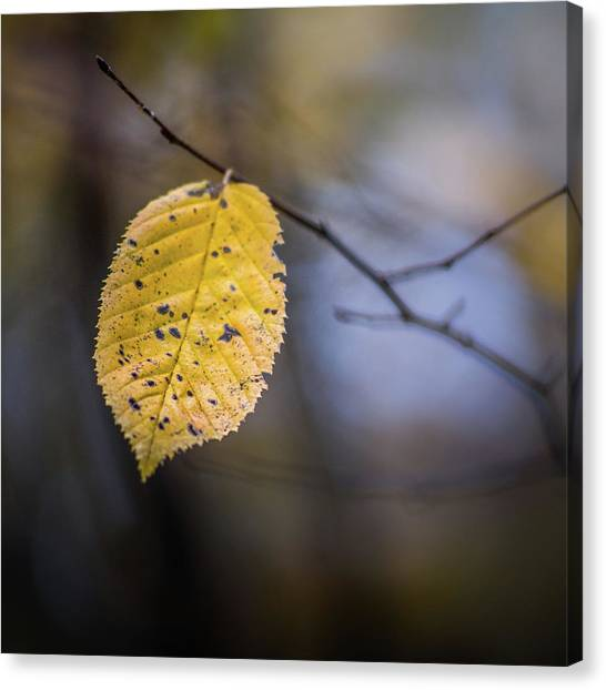 Canvas Print featuring the photograph Bright Fall Leaf 5 by Michael Arend