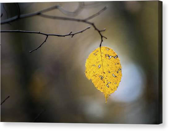 Canvas Print featuring the photograph Bright Fall Leaf 6 by Michael Arend