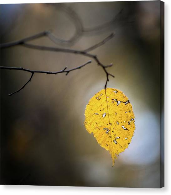 Canvas Print featuring the photograph Bright Fall Leaf 7 by Michael Arend
